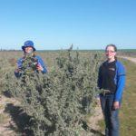 Tree_planting_saltbush_2011